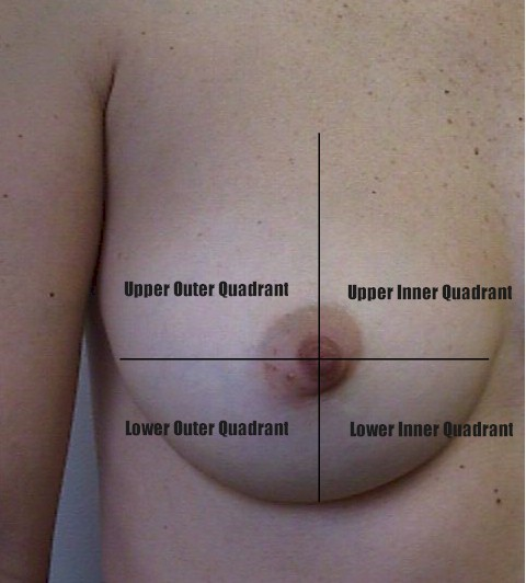 Anatomy of Breast Quadrants http://www.glowm.com/atlas_page/atlasid/rc003.html