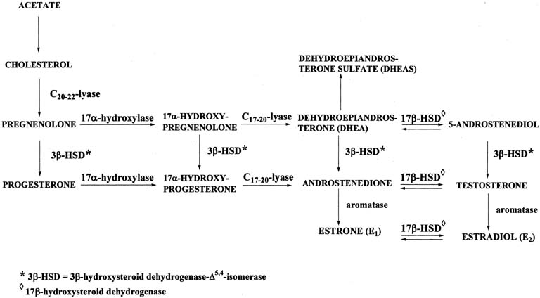ketosteroids side effects